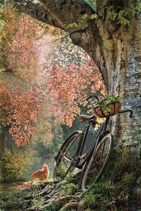 Images d'automne  - Page 2 0d2cad10