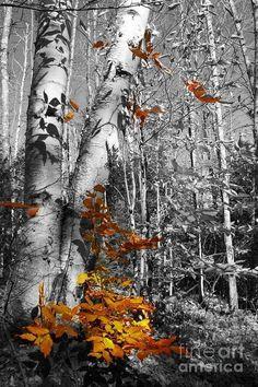 Images d'automne  - Page 7 9da32010