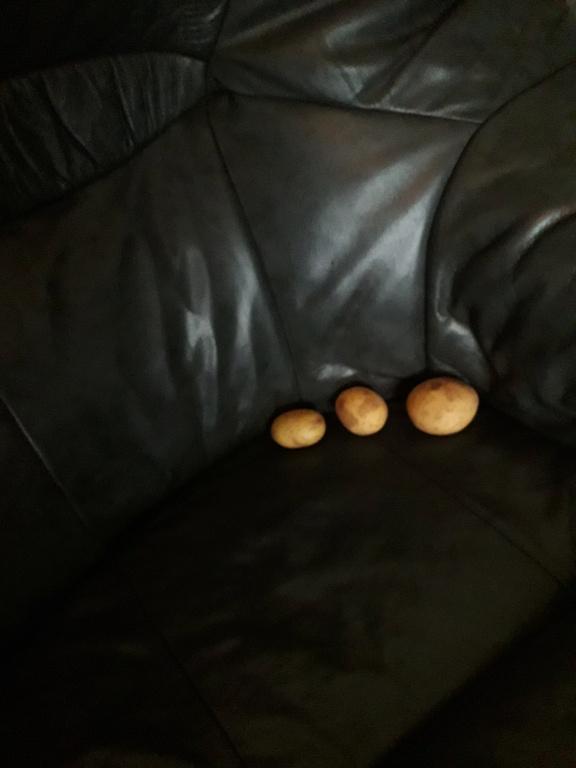 Potato Prize entries 20201210