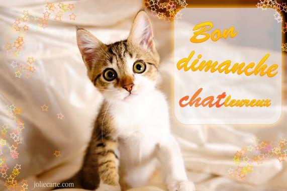 Bonjour du jour et bonsoir du soir - Page 17 Bon-di10