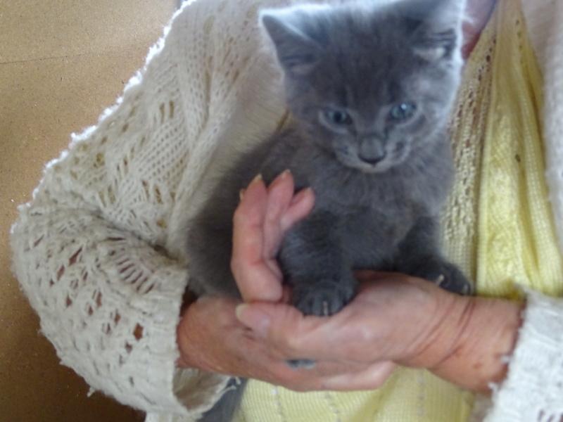 chatons à publier  Dsc01710