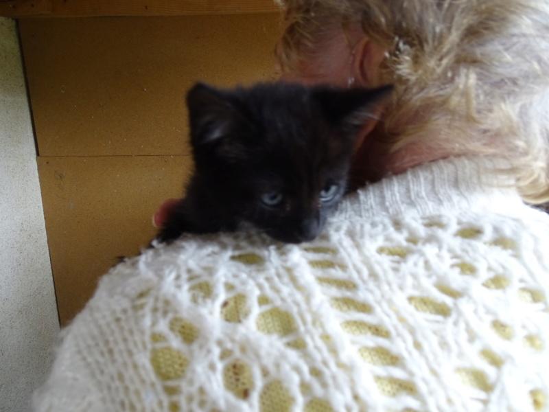 chatons à publier  Dsc01711