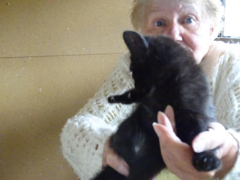 chatons à publier  Dsc01713
