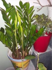 Plantes d'intérieur ou d'extérieur 20210410