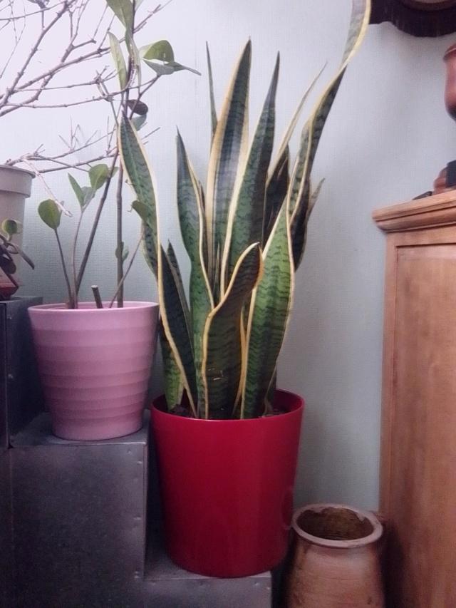 Plantes d'intérieur ou d'extérieur Img_2027