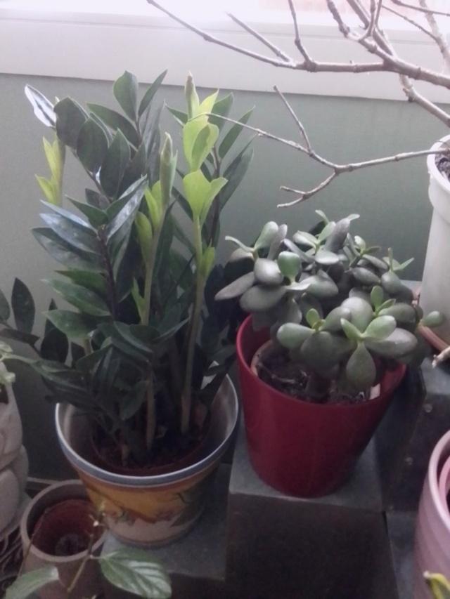 Plantes d'intérieur ou d'extérieur Img_2028
