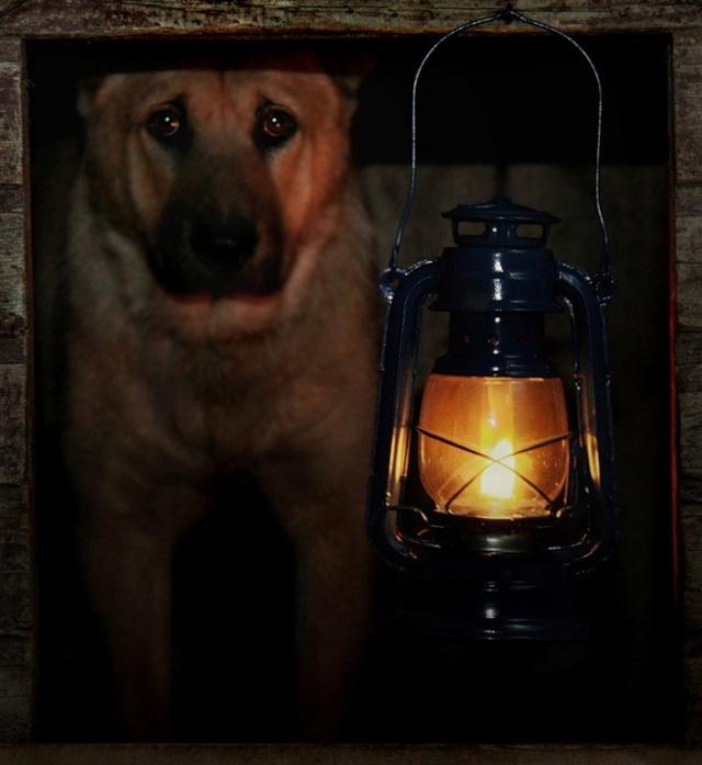 Интересные пословицы, поговорки, мемы, афоризмы Dog10
