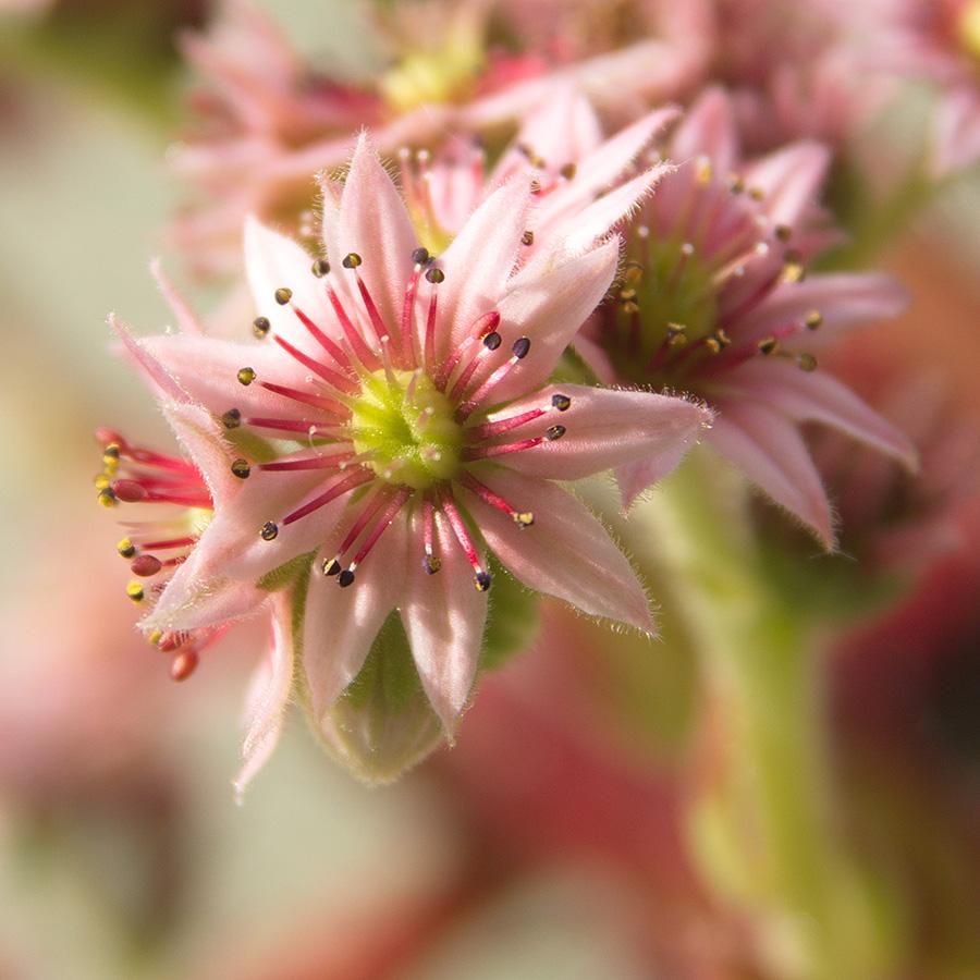 Petite Fleur  Petite10