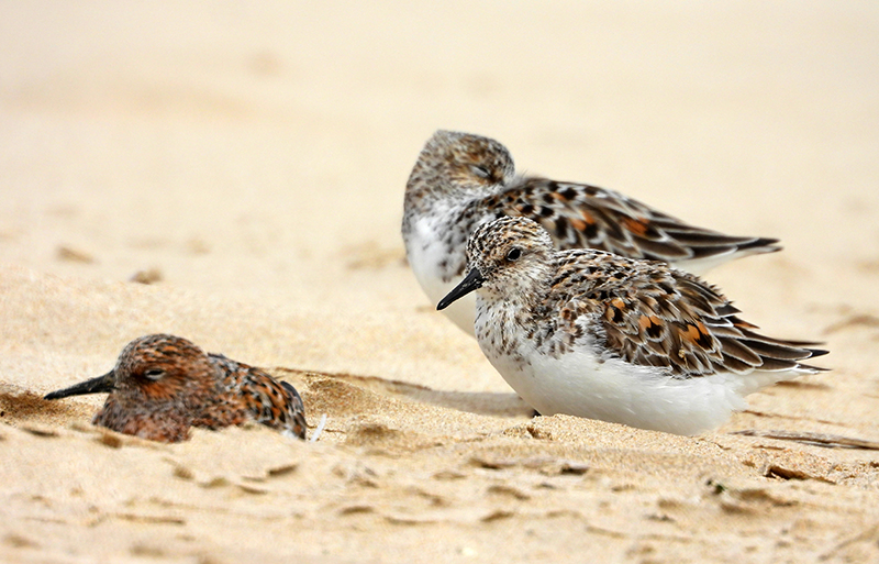 Fórum Aves - Birdwatching em Portugal - Portal 26810