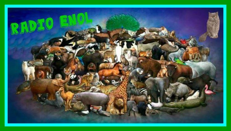 DIA MUNDIAL DE LOS ANIMALES 4 DE OCTUBRE. Image-11