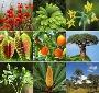 PLANTAS, FLORES Y CACTUS