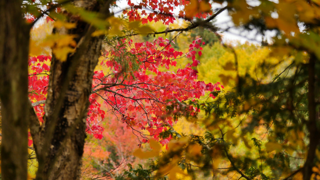 Les couleurs de l'automne au Canada P2560612