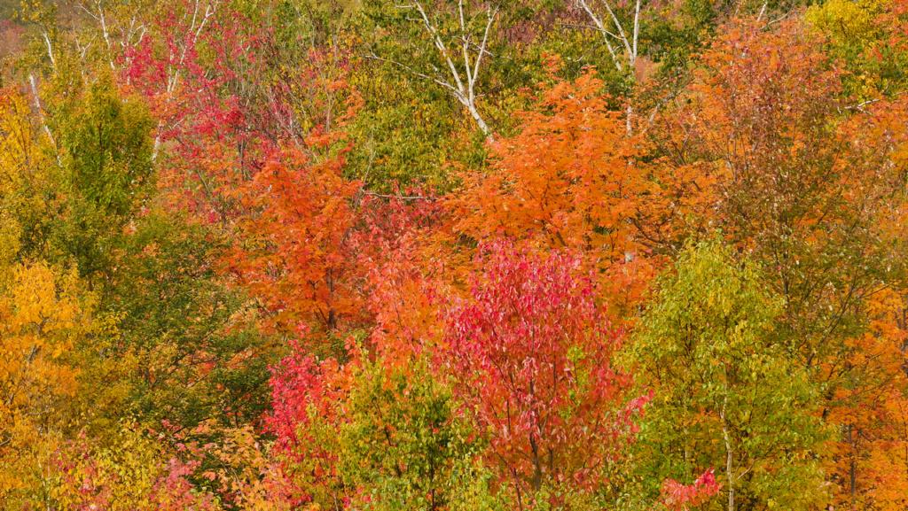 Les couleurs de l'automne au Canada P2560613