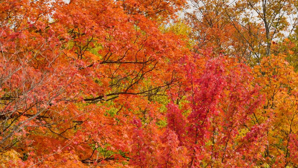Les couleurs de l'automne au Canada P2560711