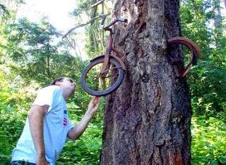 الشجرة التي تأكل الناس بمدغشقر 110