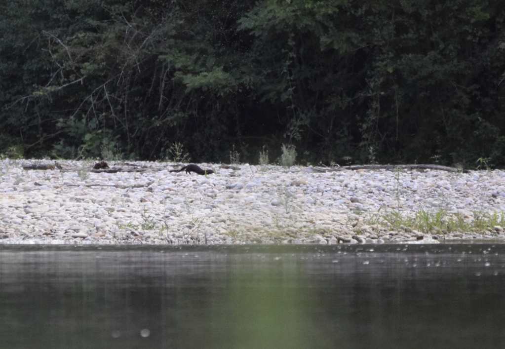 Le bord d'une rivière _dsc0112
