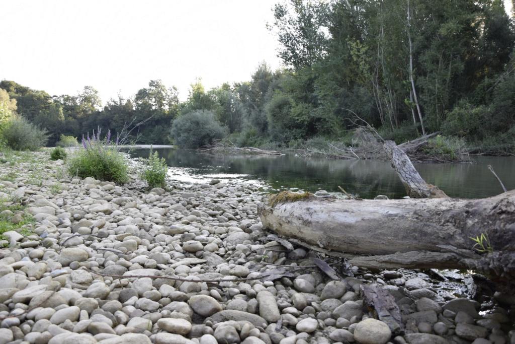 Le bord d'une rivière _dsc0316