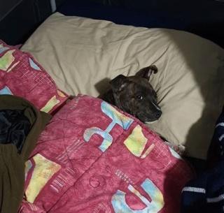 Axel's Diary Bed210