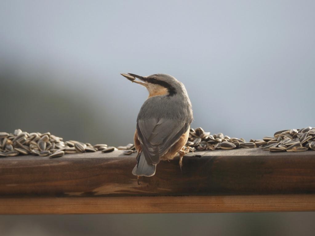 Quelques oiseaux sur la terrasse 16154410