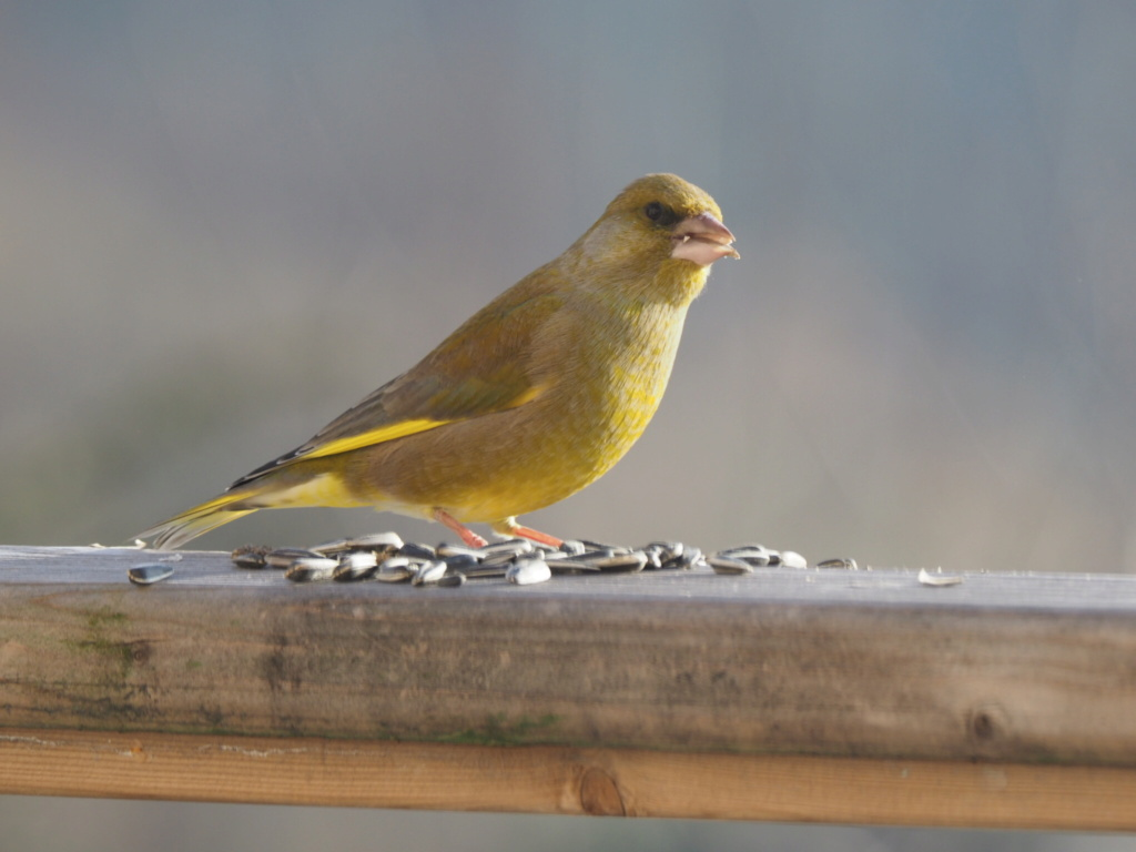 Quelques oiseaux sur la terrasse A2722810