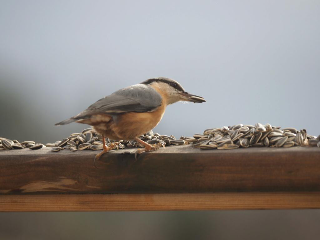 Quelques oiseaux sur la terrasse B8fe2010