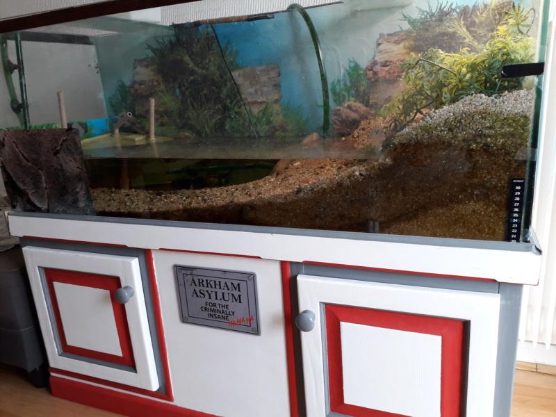 Saletés aquarium 20200610