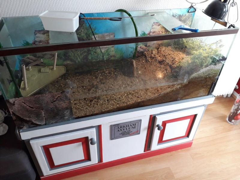 Saletés aquarium 20200612