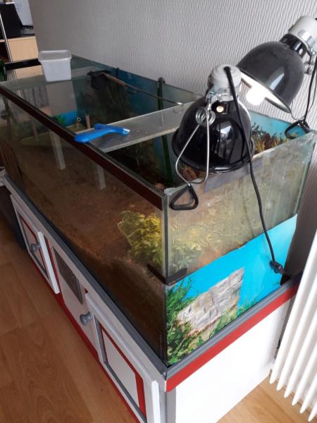 Saletés aquarium 20200613