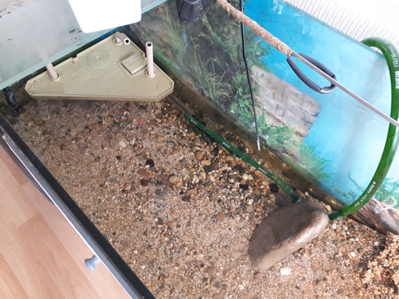 Saletés aquarium 20200614