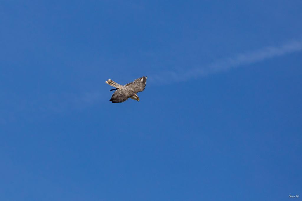 Devines le nom de l'oiseau (Europe) 29092010