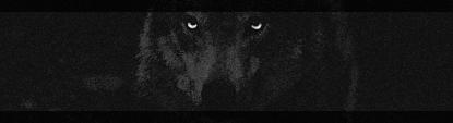 Kiplekker [Setjes shop] Wolfos10