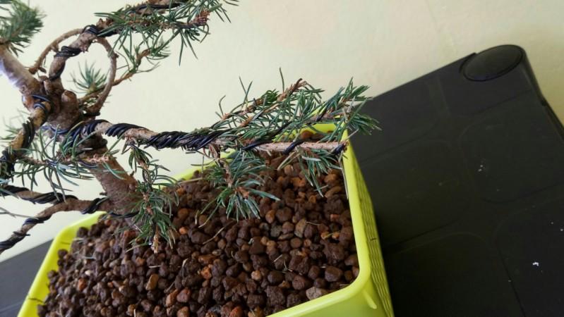 Ramas bajas secas en abeto 20190318