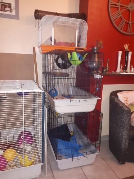 A vendre : 4 Cage différentes (Rats et petits rongeurs)  57726610