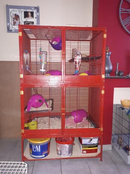 A vendre : 4 Cage différentes (Rats et petits rongeurs)  Cage_710
