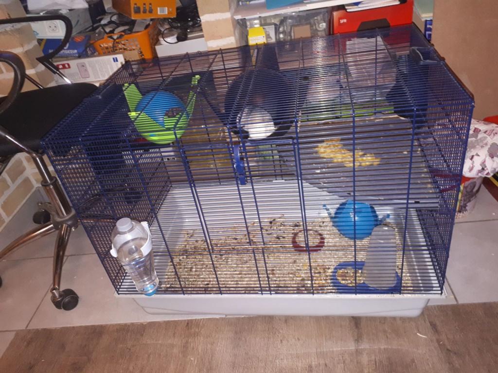 A vendre : 4 Cage différentes (Rats et petits rongeurs)  F_n_110