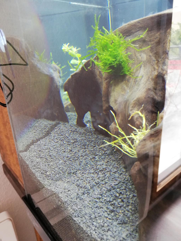 Lancement d'un aquarium Img_2015
