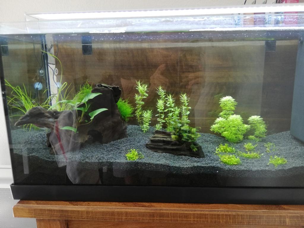 Lancement d'un aquarium - Page 2 Img_2016