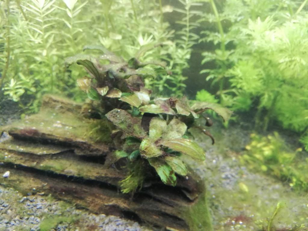 Lancement d'un aquarium - Page 3 Img_2056
