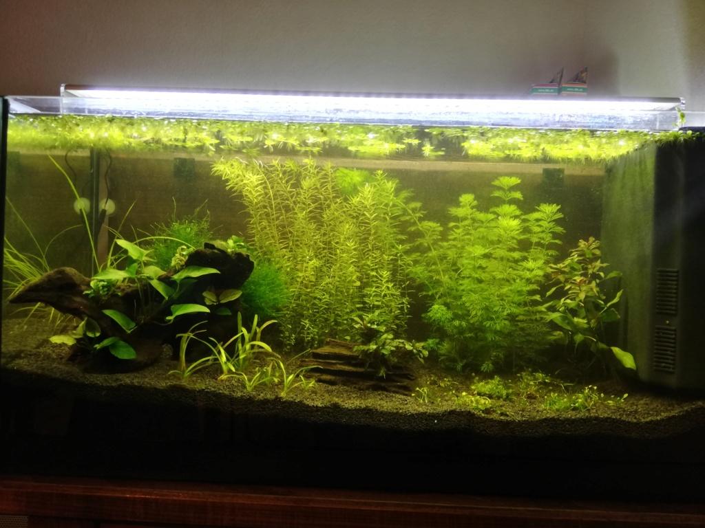 Lancement d'un aquarium - Page 3 Img_2068