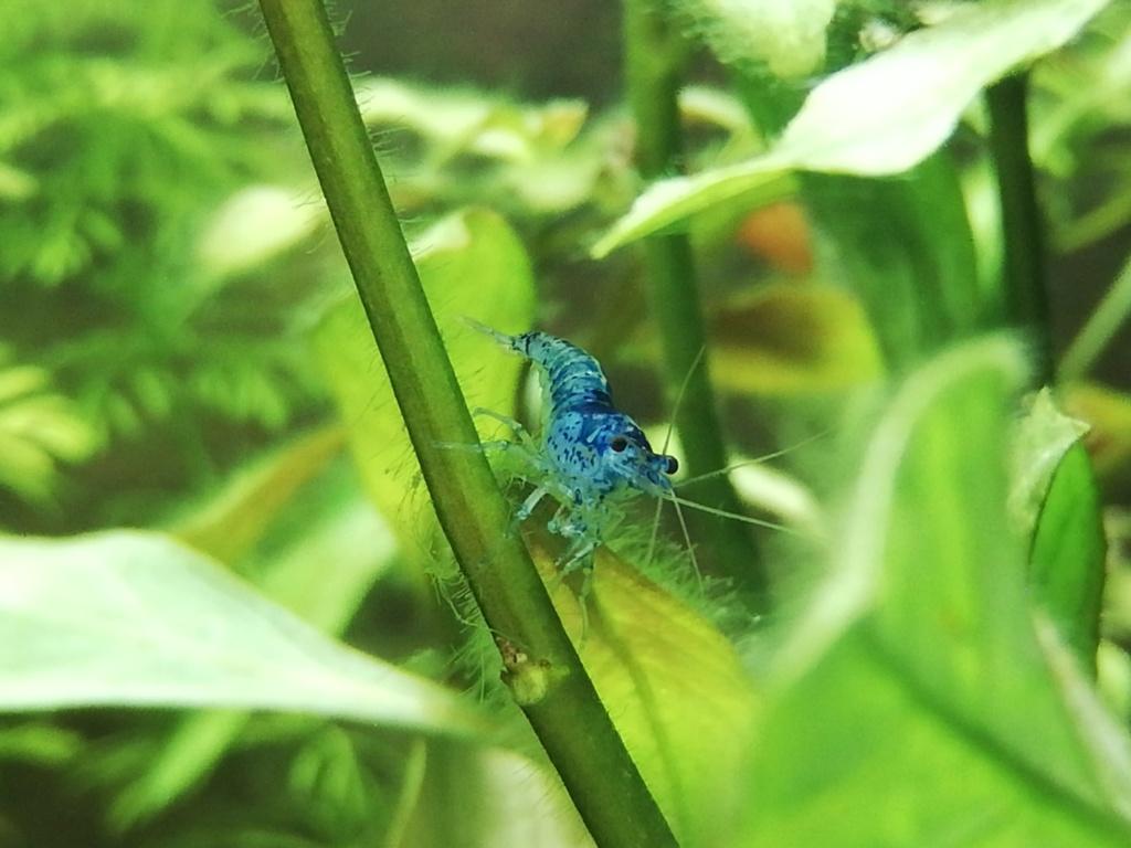 Aquarium 96L brut Img_2073