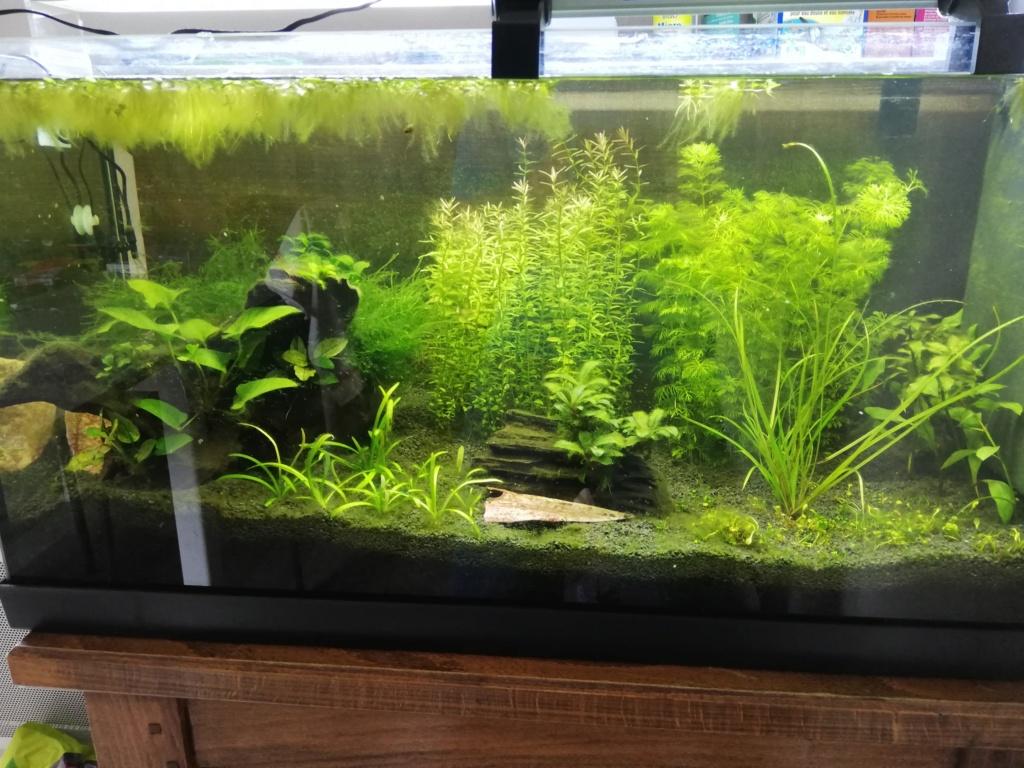 Aquarium 96L brut Img_2075
