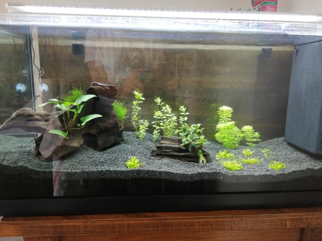 Aquarium 96L brut Img_2076