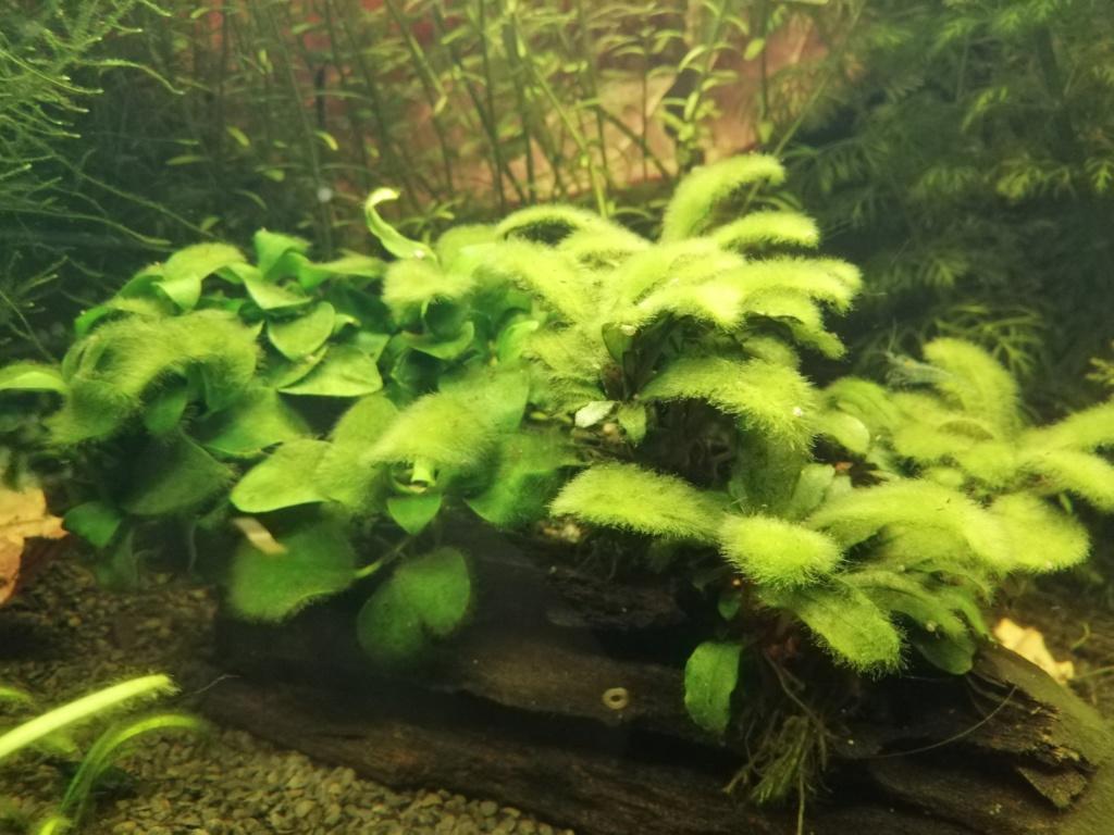 Des algues partout  Img_2088