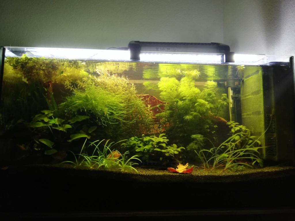 Des algues partout  Img_2089