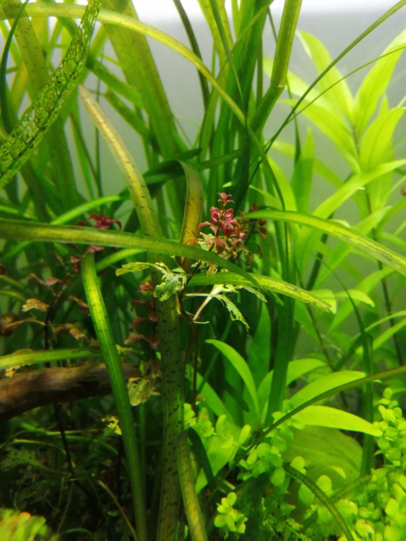 Plante mangée Img_2013
