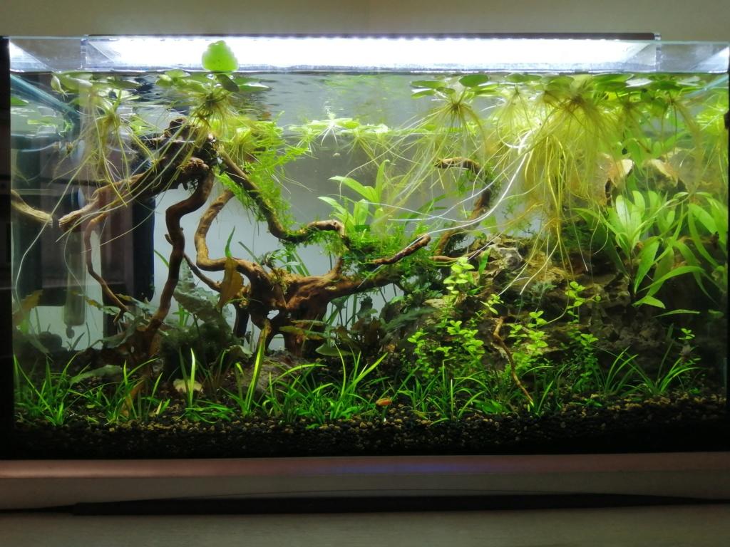 35 litres nurserie Img_2030