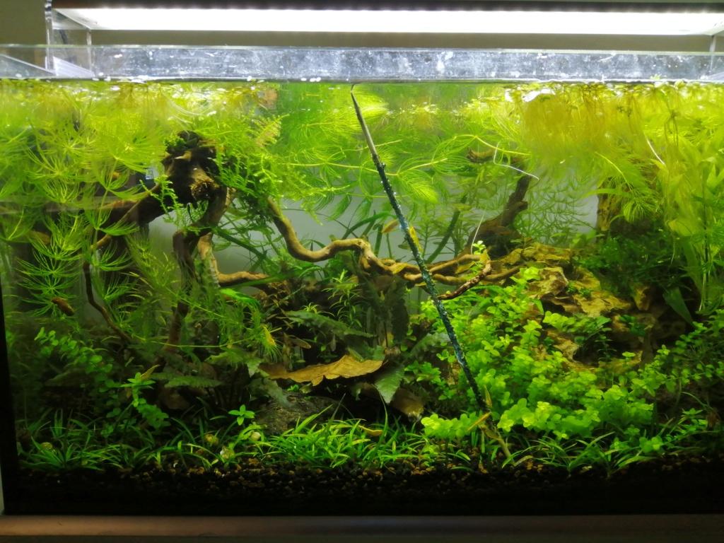 35 litres nurserie Img_2048