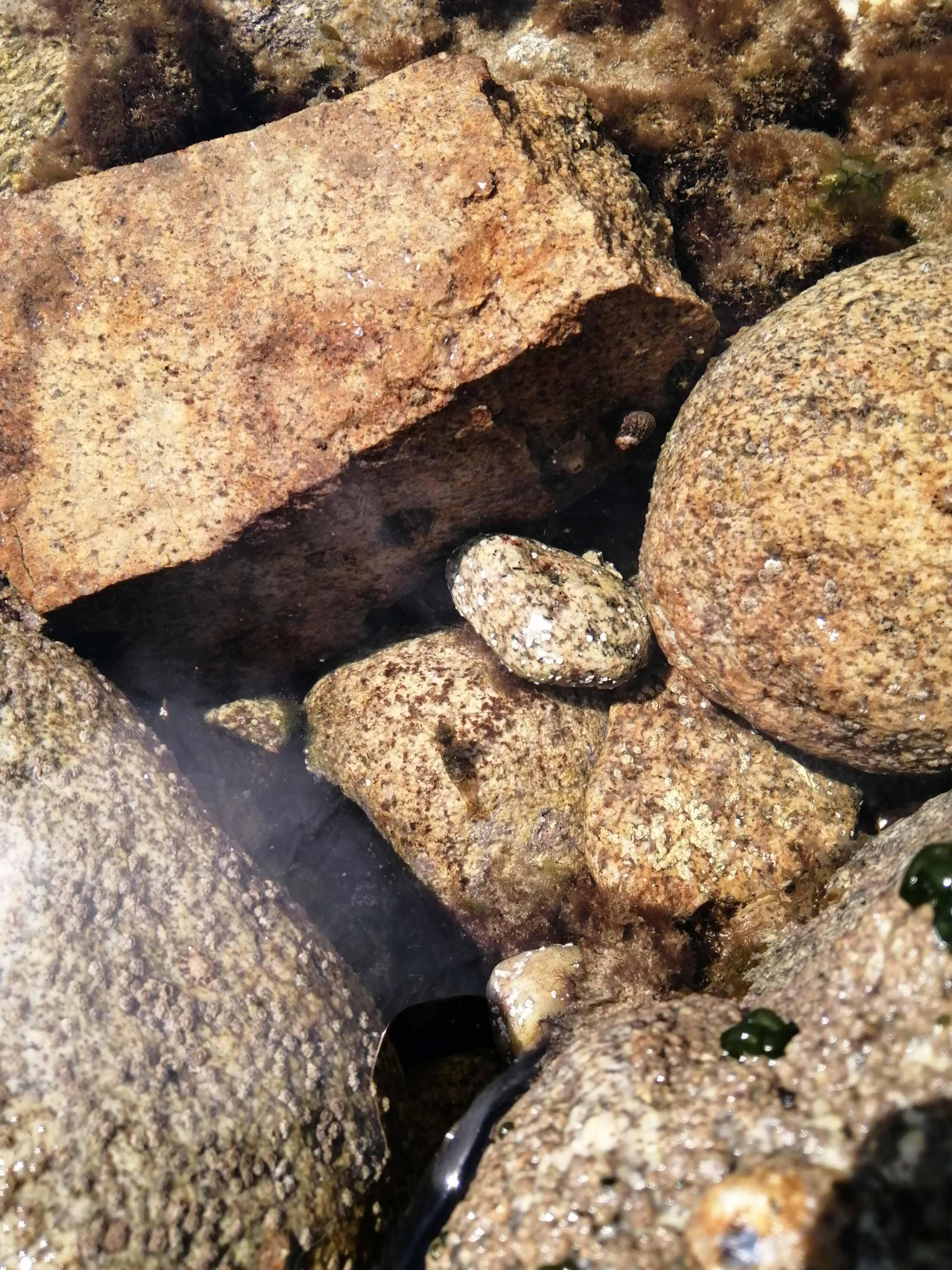 Retour de plongée de Quiberon Img_2090