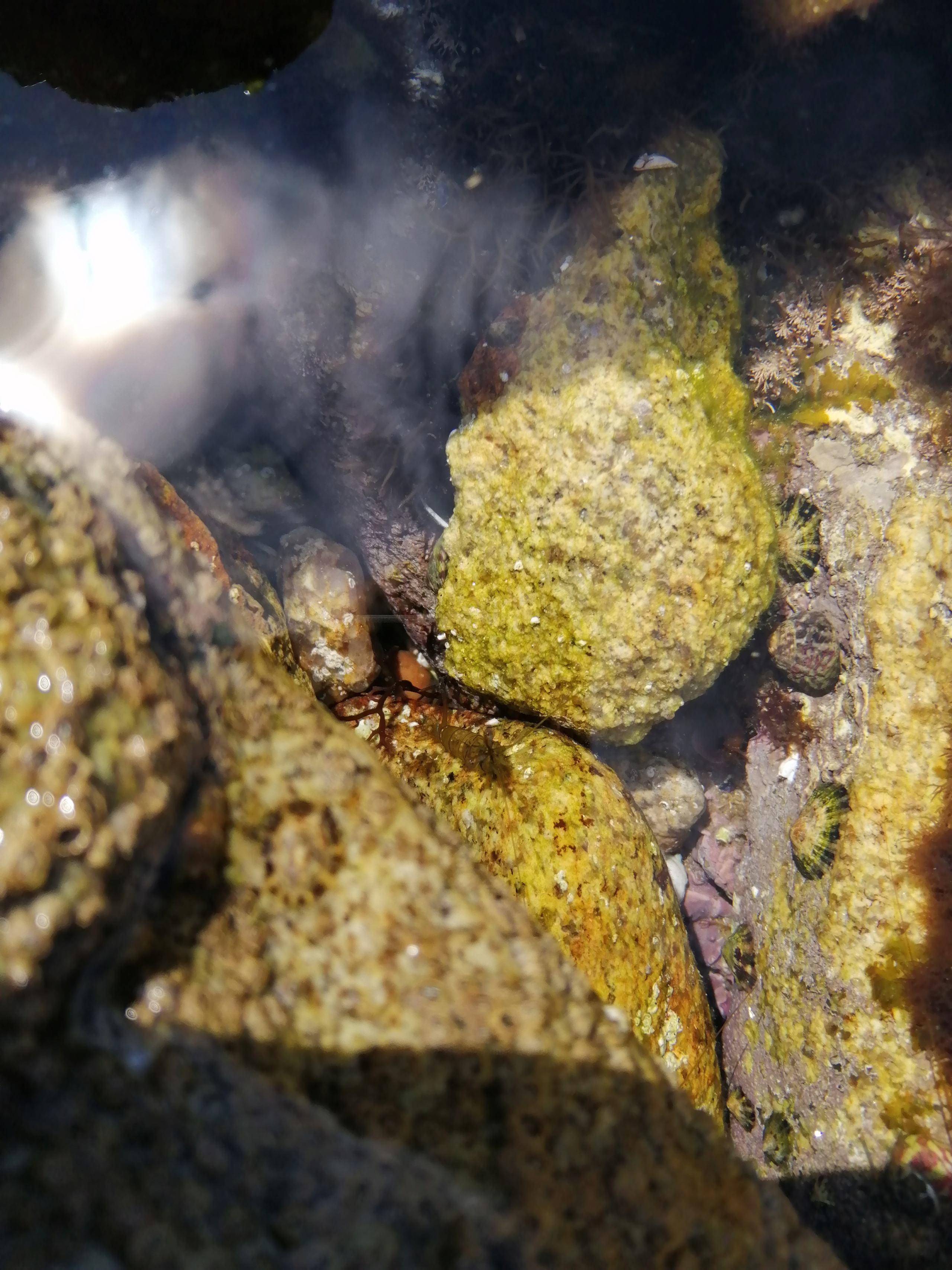Retour de plongée de Quiberon Img_2091