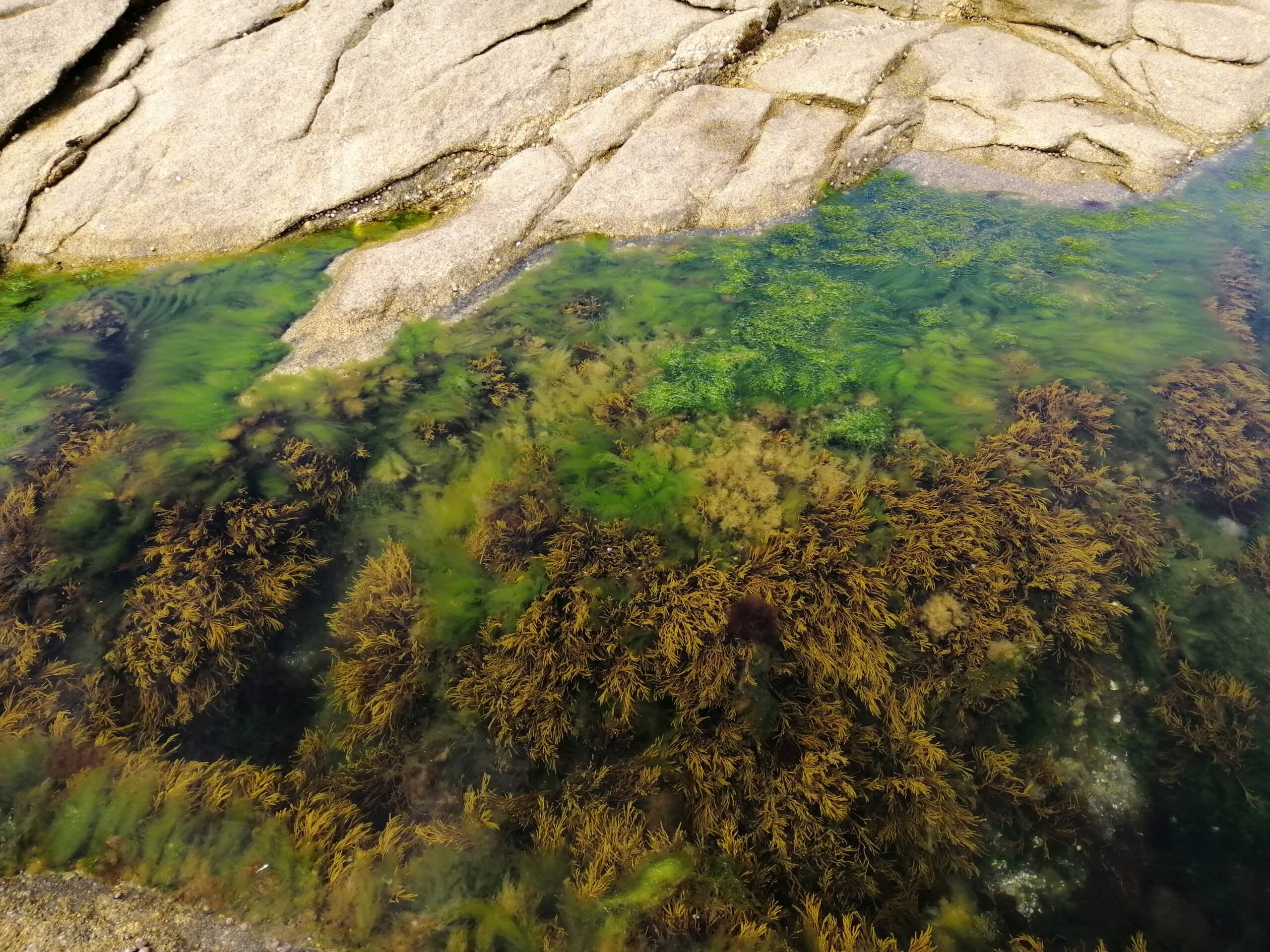 Retour de plongée de Quiberon Img_2094